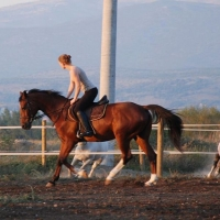 Riding school in Cetina Region with Maestral Travel Agency