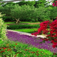 Velaris garden with Maestral Travel Agency